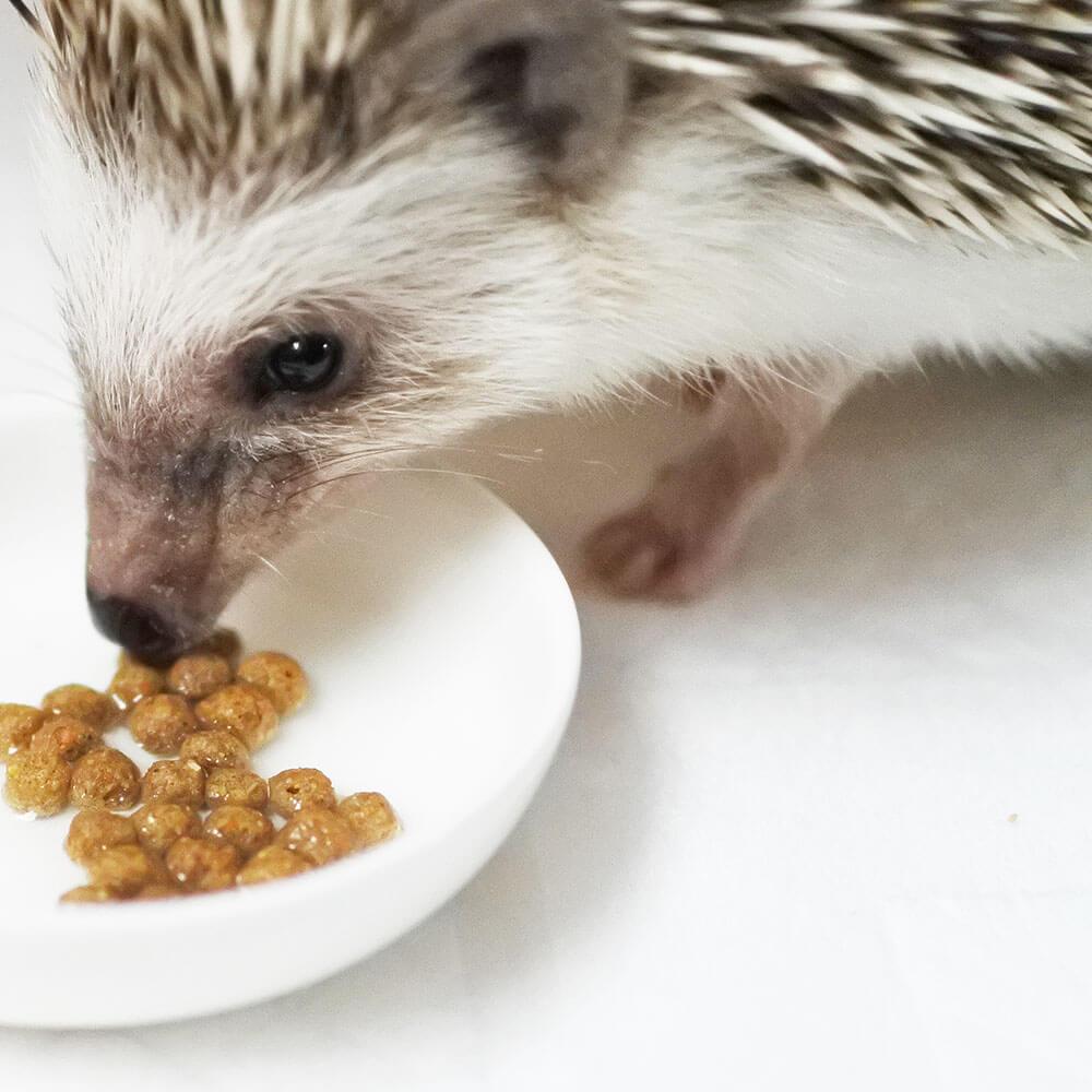 ジクラ オッティモ10を食べるハリネズミ