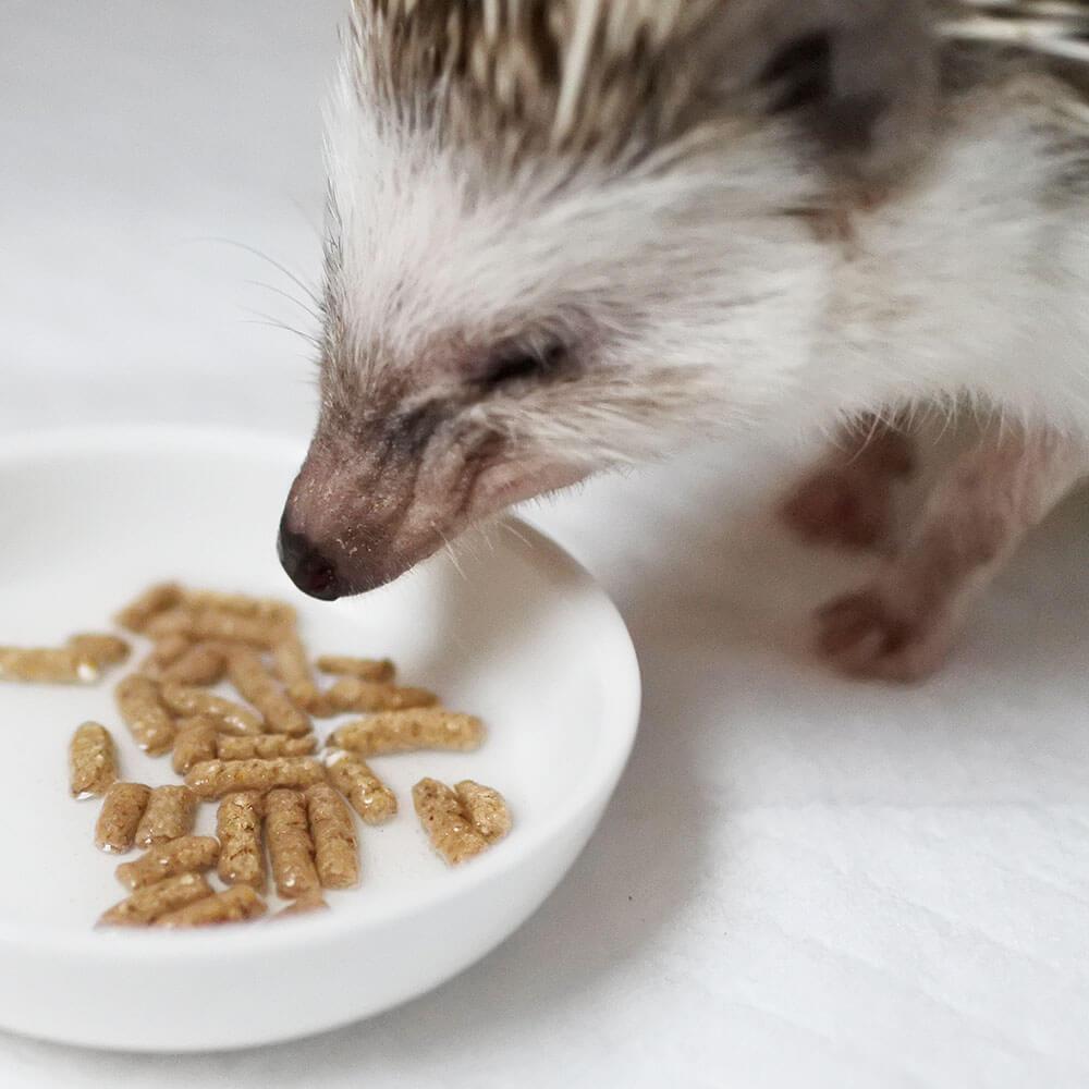 三晃商会ハリネズミフードを食べるハリネズミ