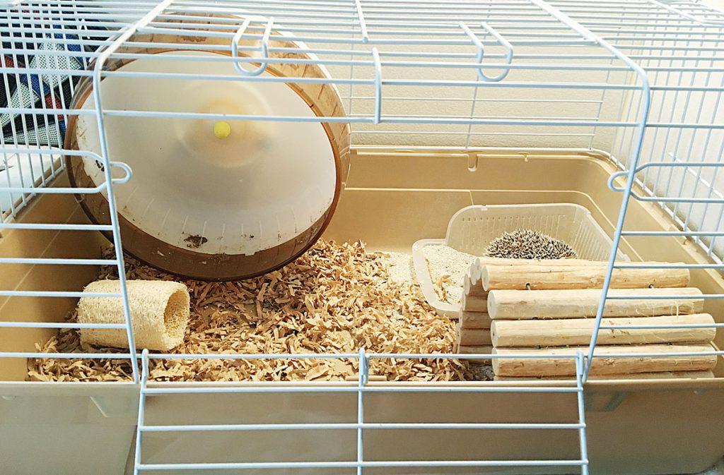 掃除前のハリネズミのケージ