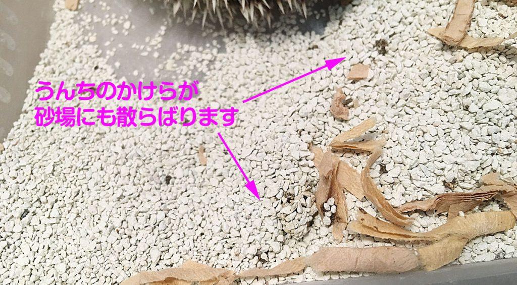 砂場に散らばったハリネズミのうんち