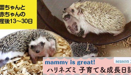 蕾ちゃんと赤ちゃんの産後13~30日目―ハリネズミの子育て&成長日記23(シーズン2)―