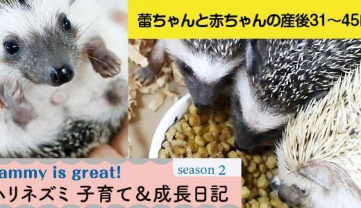 蕾ちゃんと赤ちゃんの産後31~45日目―ハリネズミの子育て&成長日記25(シーズン2)