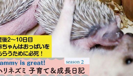 姫ちゃんと赤ちゃんの産後2~10日目まで―ハリネズミの子育て&成長日記26(シーズン2)―