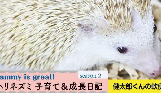 健太郎くんの軟便―ハリネズミの子育て&成長日記28(シーズン2)
