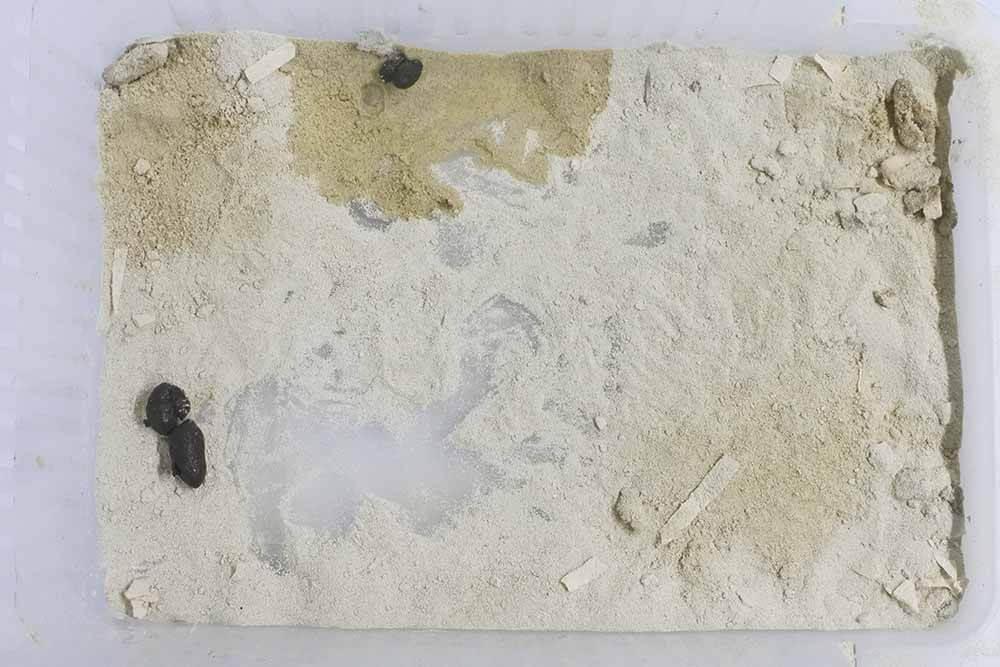 ハムスターの消臭浴び砂「キレイになる砂」使用後の様子