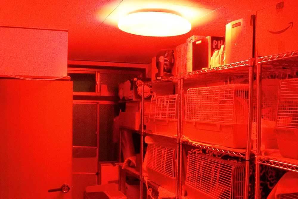 赤い照明に変更したハリネズミ部屋