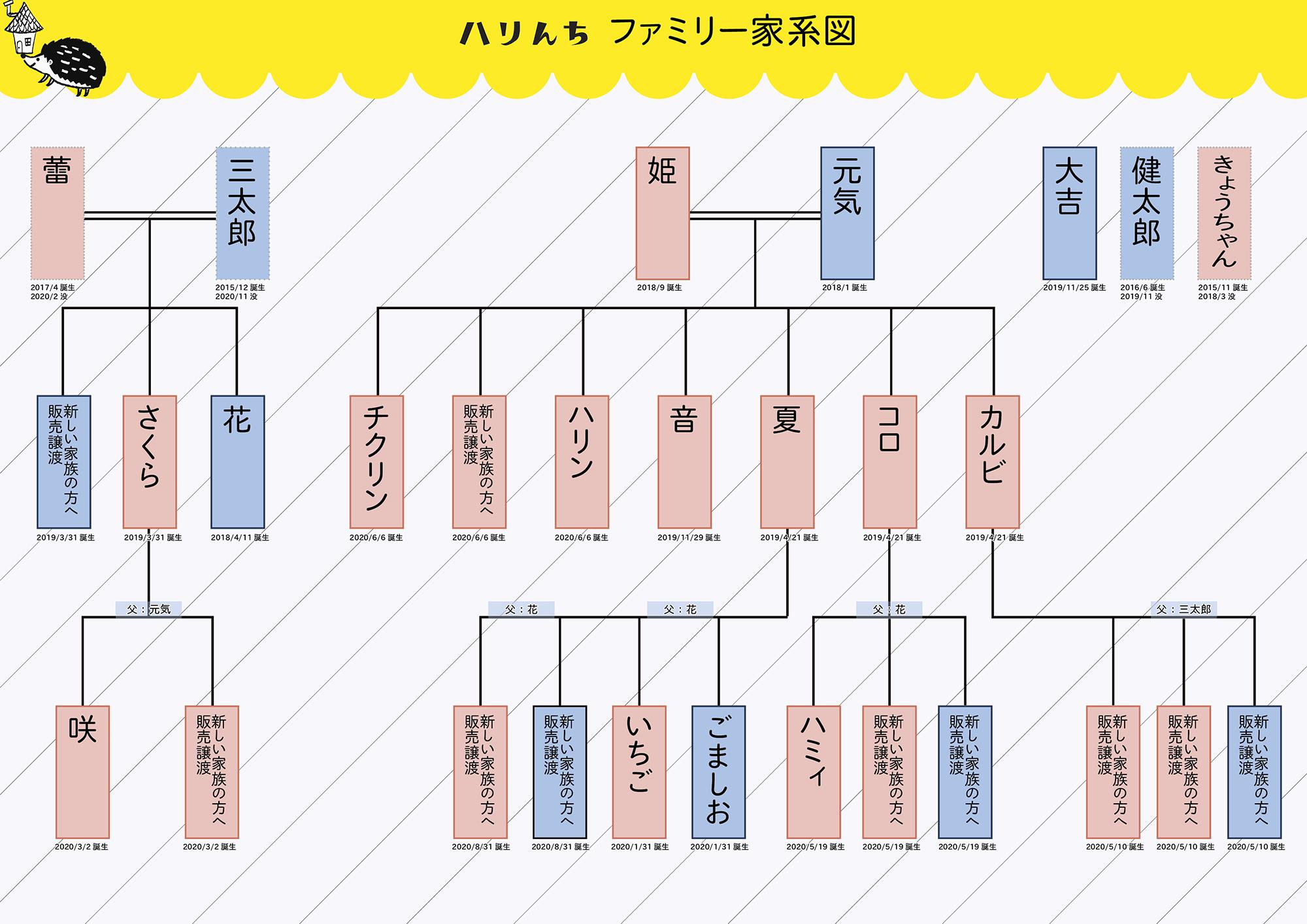 ハリんちファミリー家系図