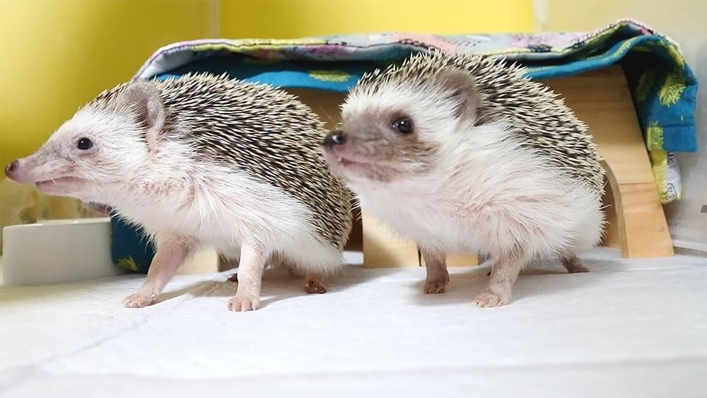 咲ちゃん(左)といちごちゃん(右)
