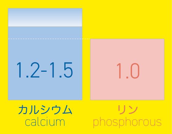 ハリネズミの理想カルシウム/リン比