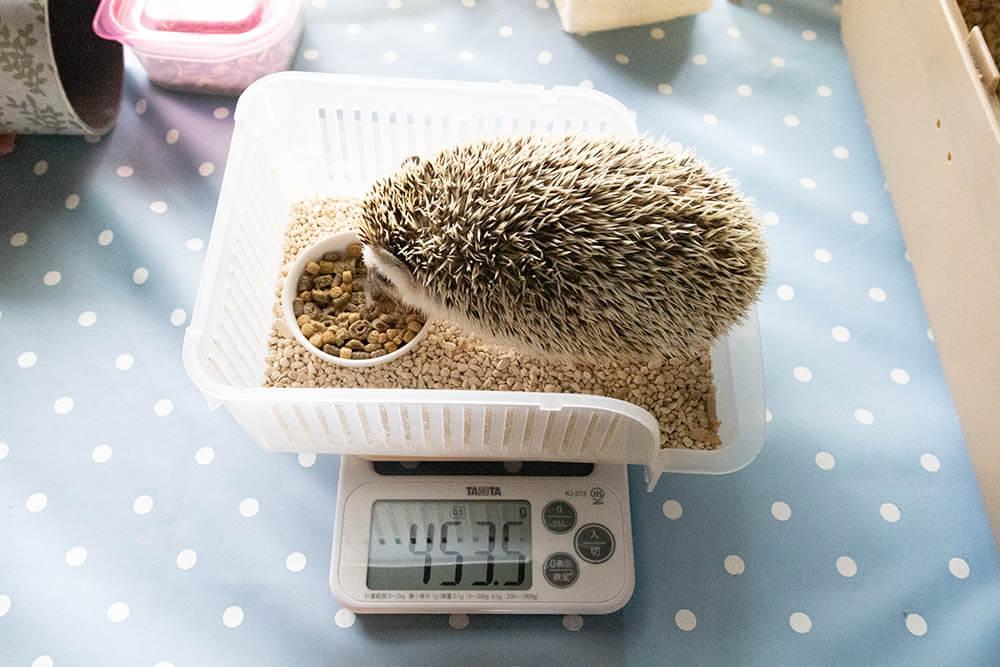 ハリちゃんに容器の中に入ってもらって容器ごとスケールに置けばさわらずに体重が測れる